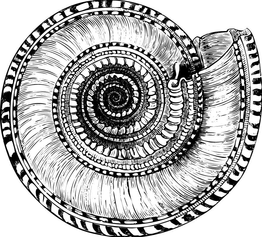 Ammonit