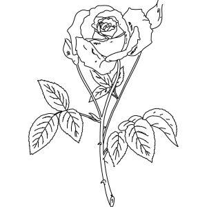 Stempel Blumen Rose